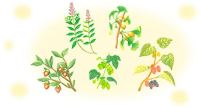 植物エキスが肌老化をストップ